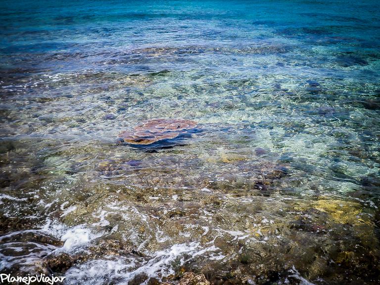 Barreira de Corais de Cozumel na Praia Corona
