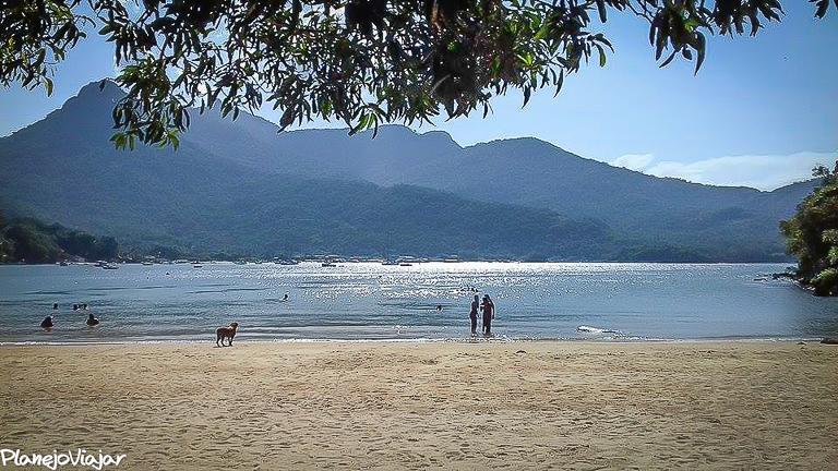 Praia da Crena vista de debaixo de uma árvore